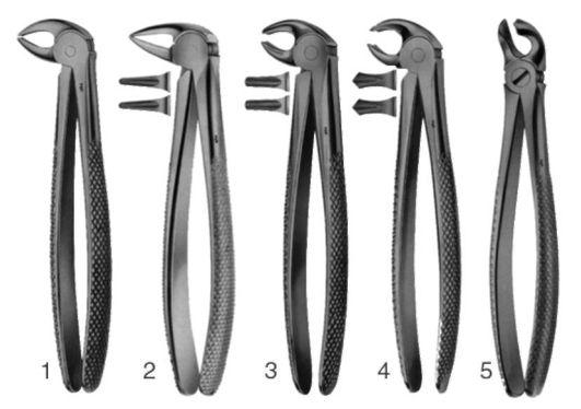 Иногда при удалении зуба выполняются надрезы на дёснах и накладываются швы. Удаление многокорневого зуба может выполняться по частям. В арсенале стоматолога присутствует целый набор щипцов, предназначенных для удаления конкретного вида зубов. Сама процедура удаления выполняется.